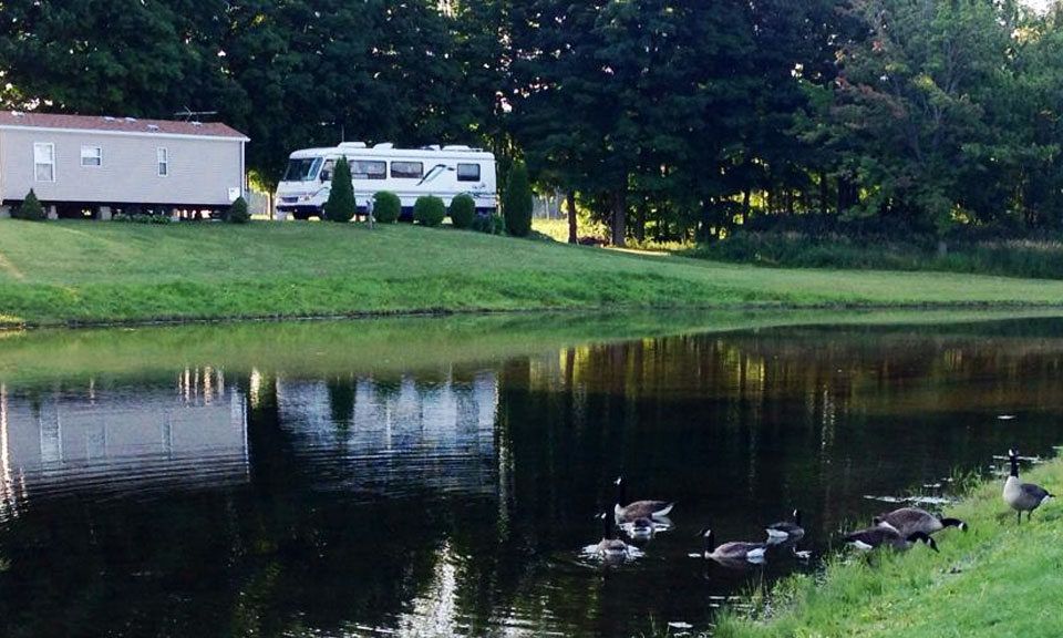Ducks on the Pond at Pine Lane Campground